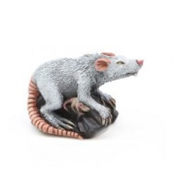 Rat géant - femelle