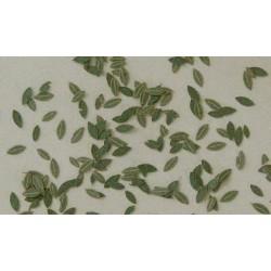 L3005 Feuilles génériques vertes (150 pcs environ)