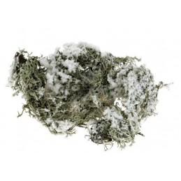 Mousse grise enneigée