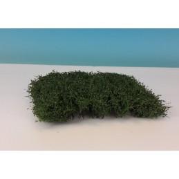 Haies/arbustes - été