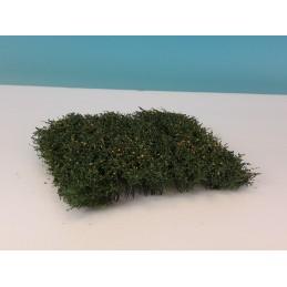 250-43 Haies/arbustes -...
