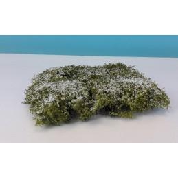 250-45 Haies/arbustes en...