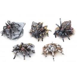 Grosses araignées (5)