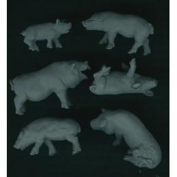 Cochons (6)