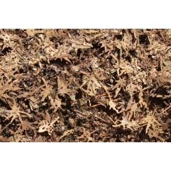 L3309 feuilles tropicales en décomposition (80 pcs environ)
