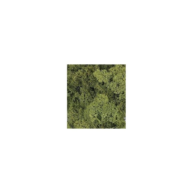 Mousse vert moyen