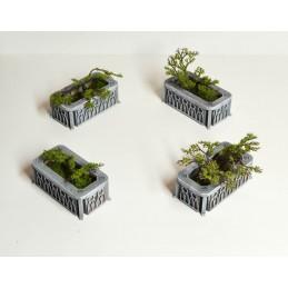 Parterres de plantes