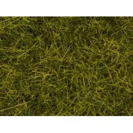 00402 Tapis de prairie pré
