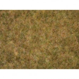00416 Tapis de prairie champ